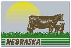 Retro Sunset Cows Nebraska Postcard